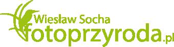 Wiesław Socha - Fotografia przyrodnicza